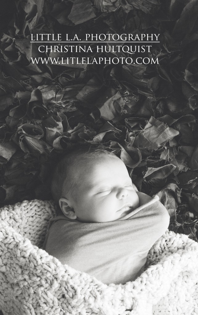 santa monica newborn photographer