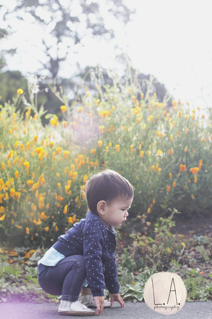 norcal travel family photography